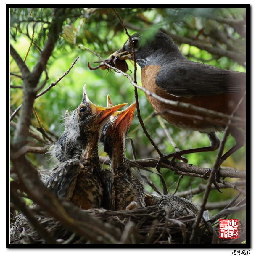 【心想事成】为我家门前的鸟巢拍个照_图1-18