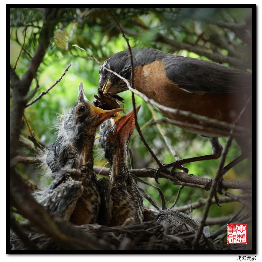 【心想事成】为我家门前的鸟巢拍个照_图1-19