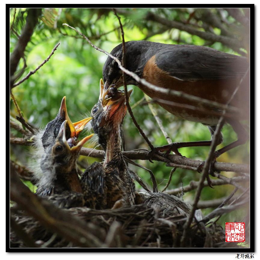 【心想事成】为我家门前的鸟巢拍个照_图1-21