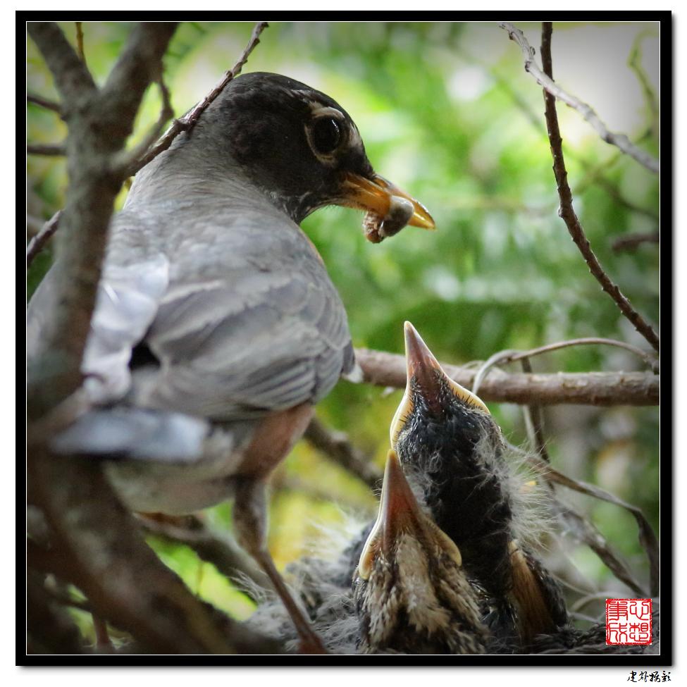 【心想事成】为我家门前的鸟巢拍个照_图1-24