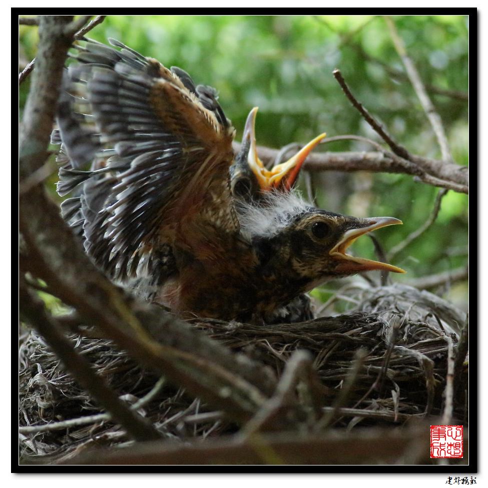 【心想事成】为我家门前的鸟巢拍个照_图1-25