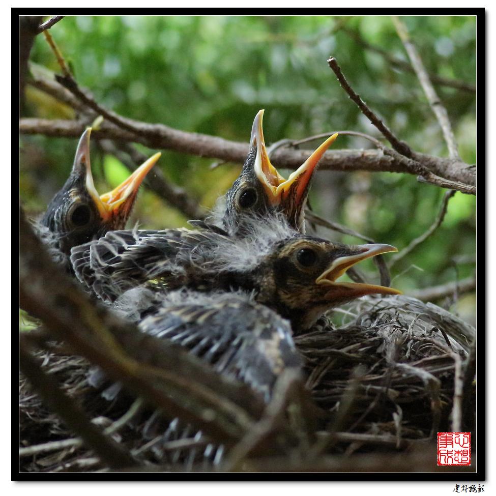 【心想事成】为我家门前的鸟巢拍个照_图1-26
