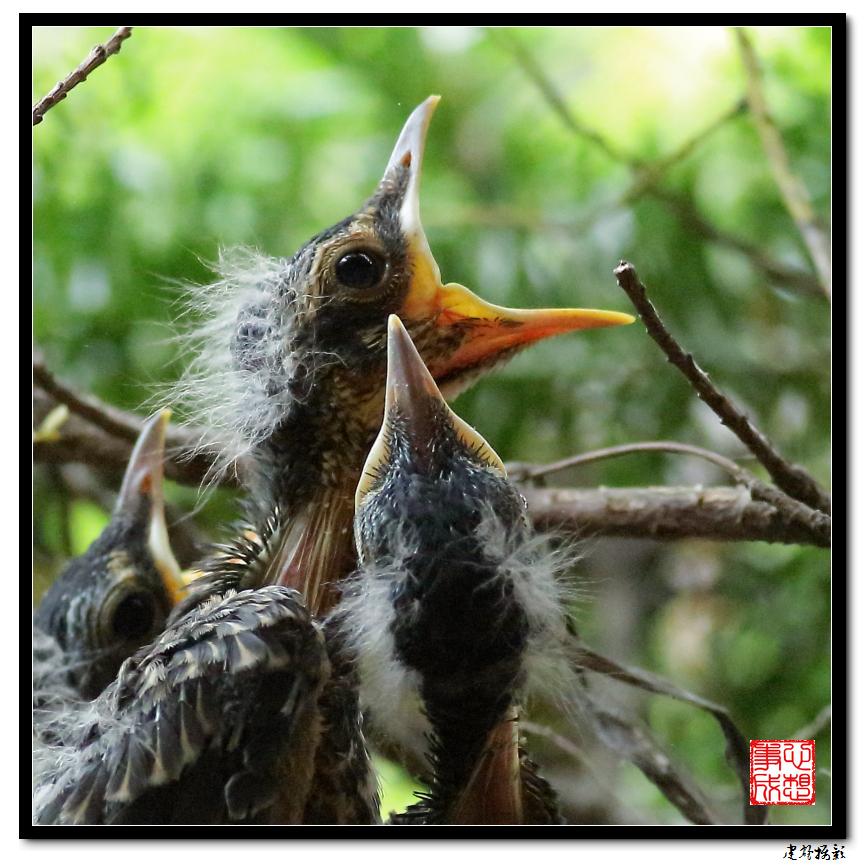 【心想事成】为我家门前的鸟巢拍个照_图1-27