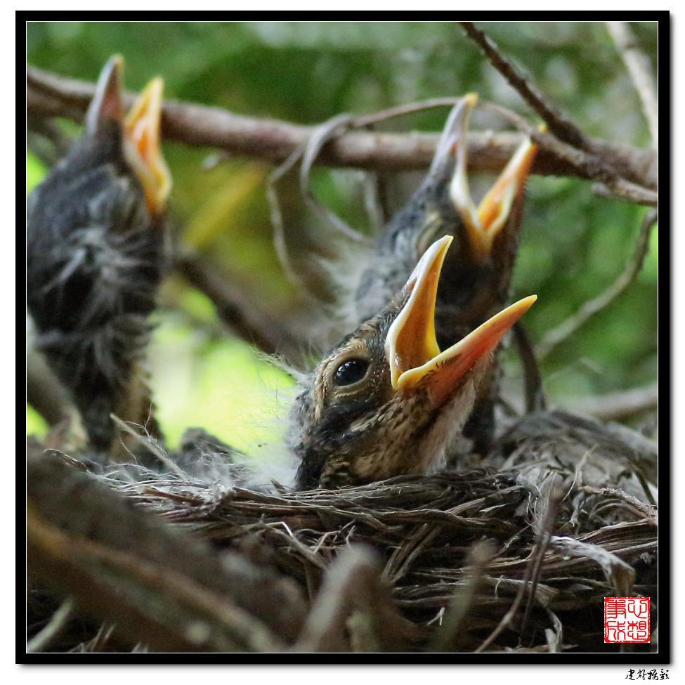 【心想事成】为我家门前的鸟巢拍个照_图1-28