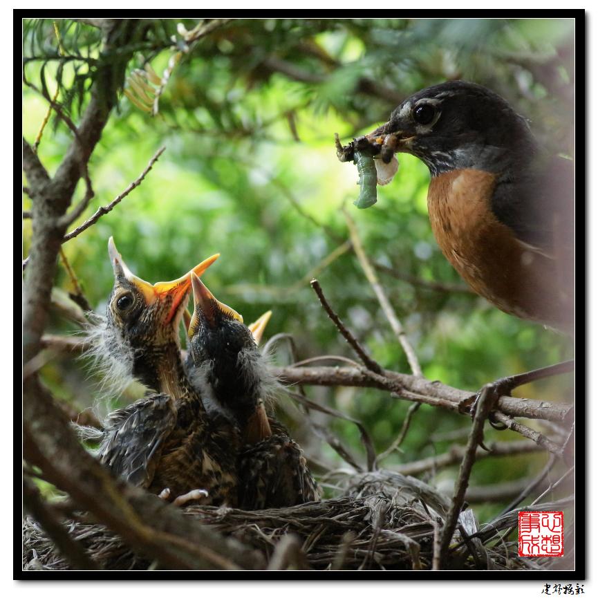 【心想事成】为我家门前的鸟巢拍个照_图1-29