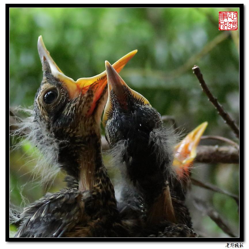 【心想事成】为我家门前的鸟巢拍个照_图1-30