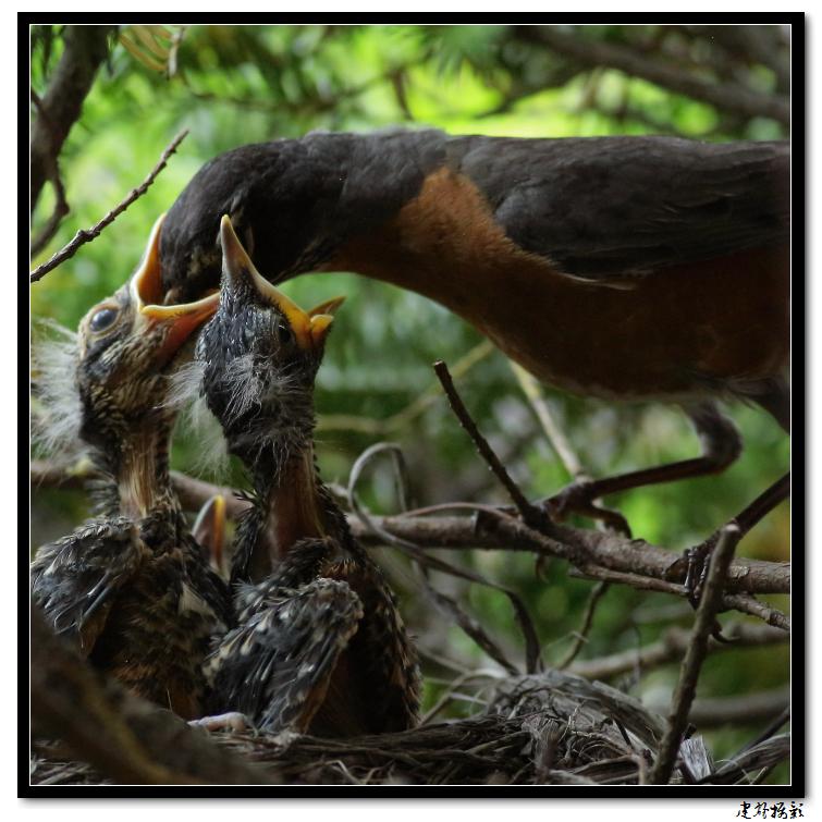 【心想事成】为我家门前的鸟巢拍个照_图1-32