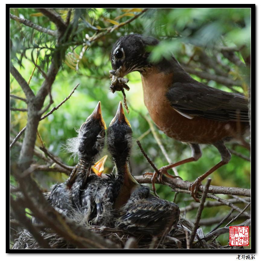【心想事成】为我家门前的鸟巢拍个照_图1-33