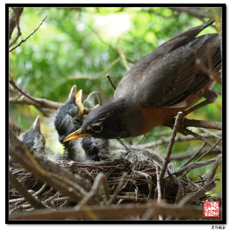 【心想事成】为我家门前的鸟巢拍个照_图1-36