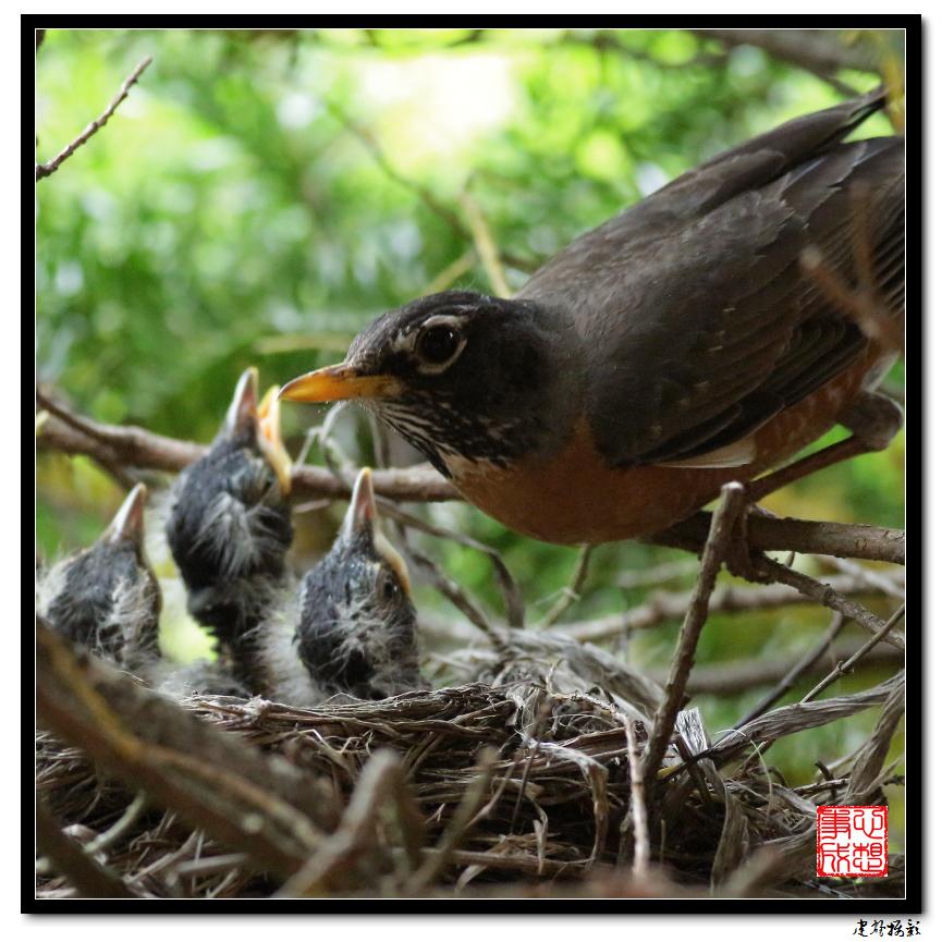 【心想事成】为我家门前的鸟巢拍个照_图1-37