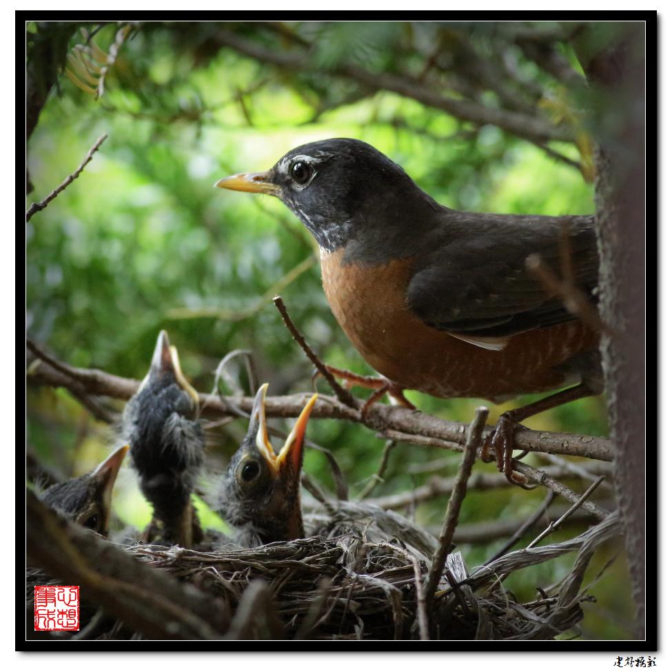 【心想事成】为我家门前的鸟巢拍个照_图1-38