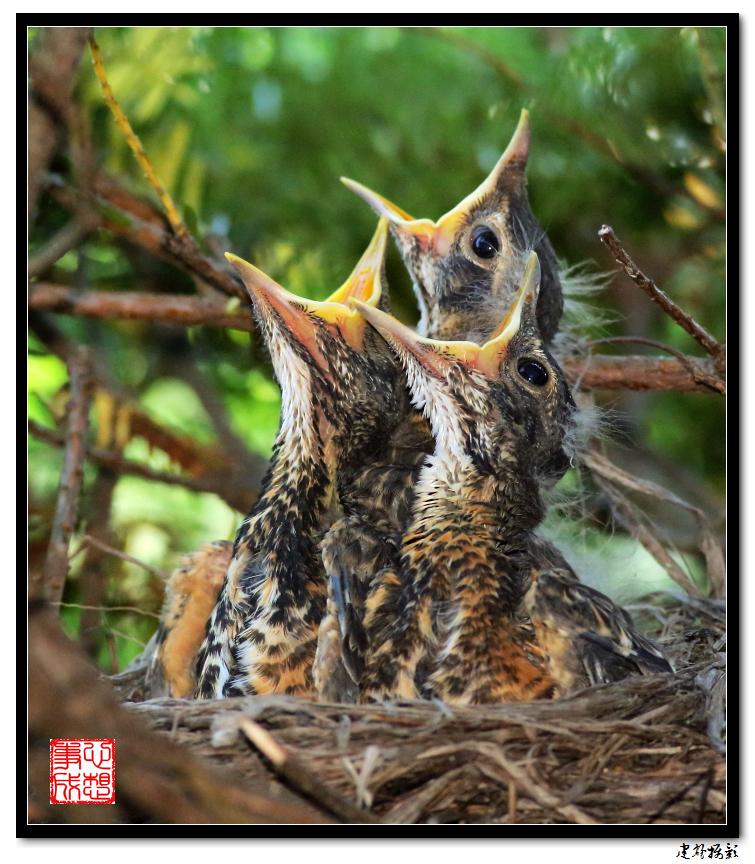 【心想事成】为我家门前的鸟巢拍个照之2_图1-1