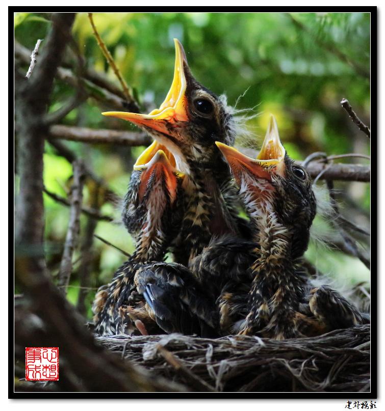 【心想事成】为我家门前的鸟巢拍个照之2_图1-3