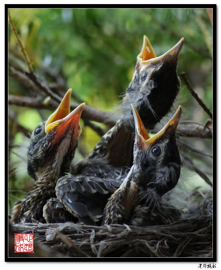【心想事成】为我家门前的鸟巢拍个照之2_图1-2
