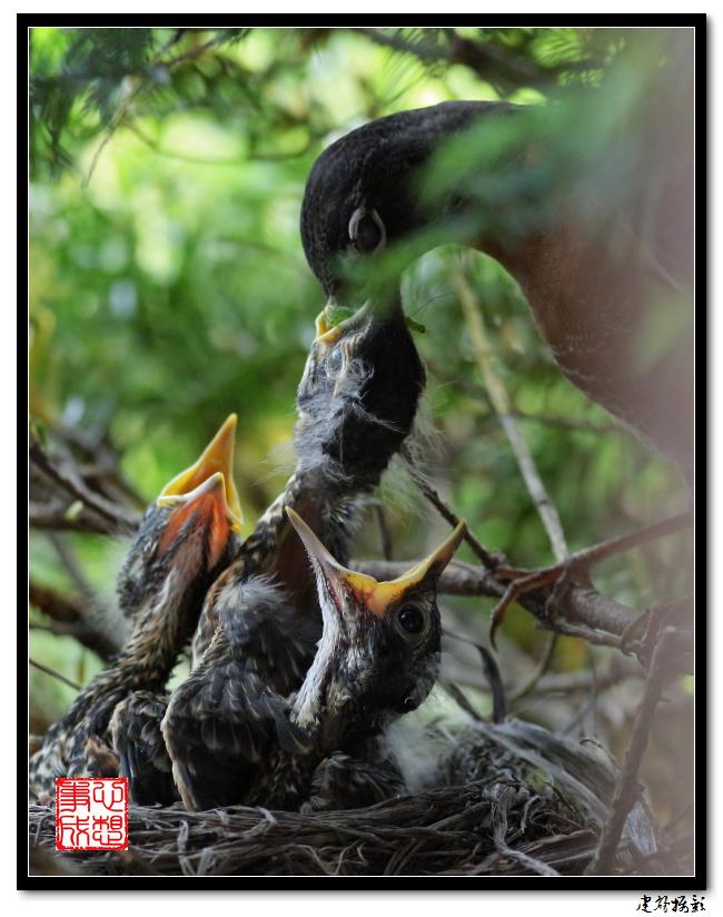 【心想事成】为我家门前的鸟巢拍个照之2_图1-6