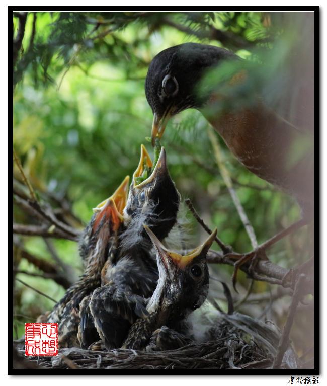【心想事成】为我家门前的鸟巢拍个照之2_图1-5