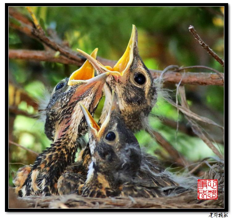 【心想事成】为我家门前的鸟巢拍个照之2_图1-4