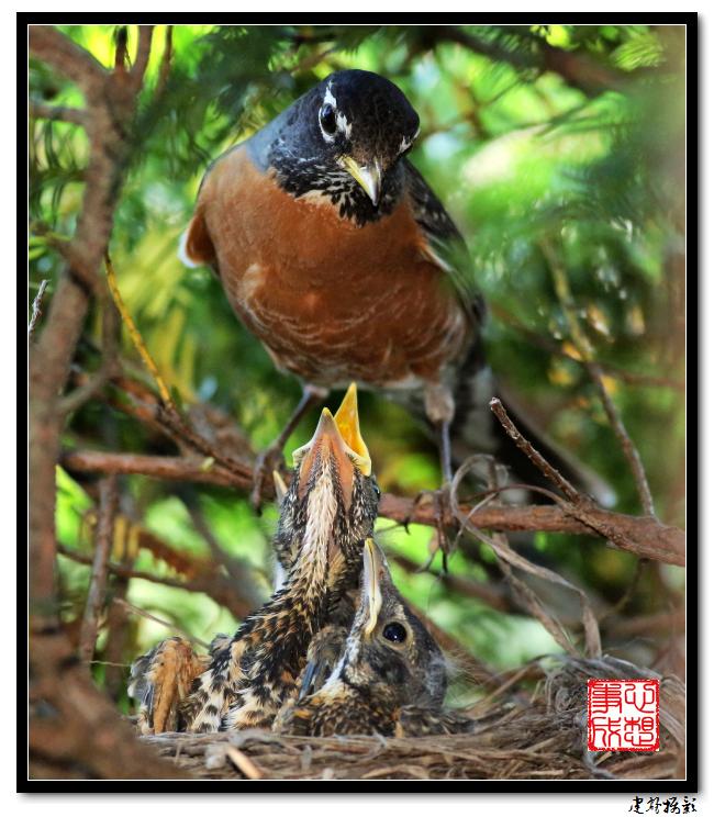 【心想事成】为我家门前的鸟巢拍个照之2_图1-26