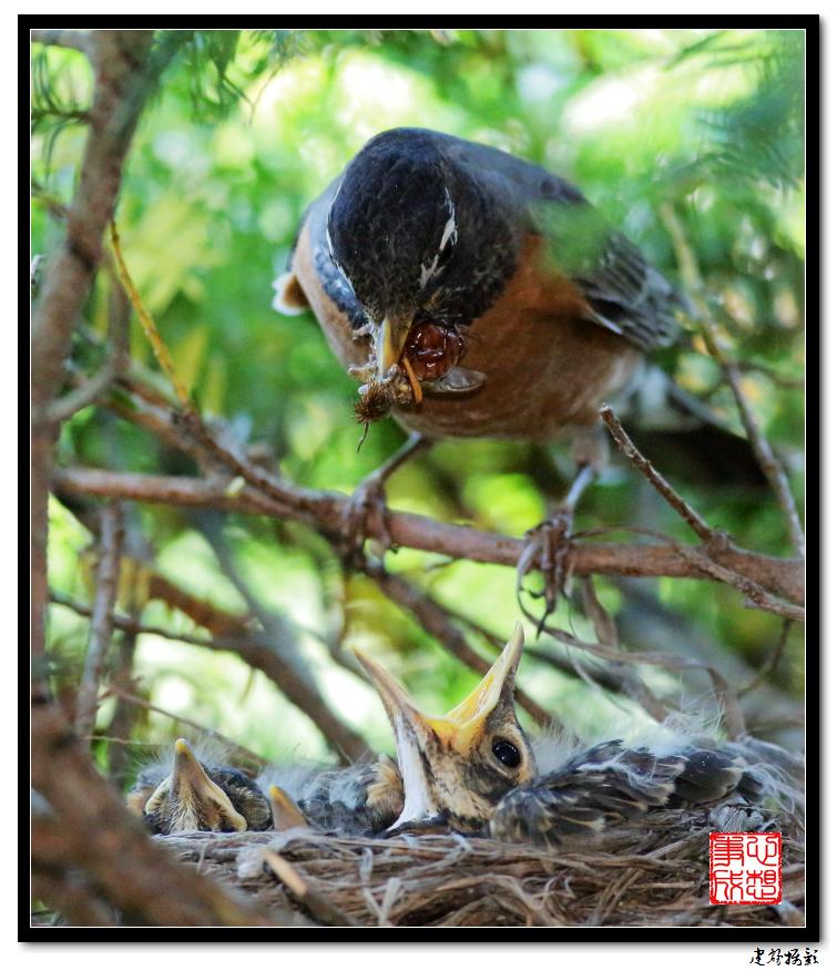 【心想事成】为我家门前的鸟巢拍个照之2_图1-7