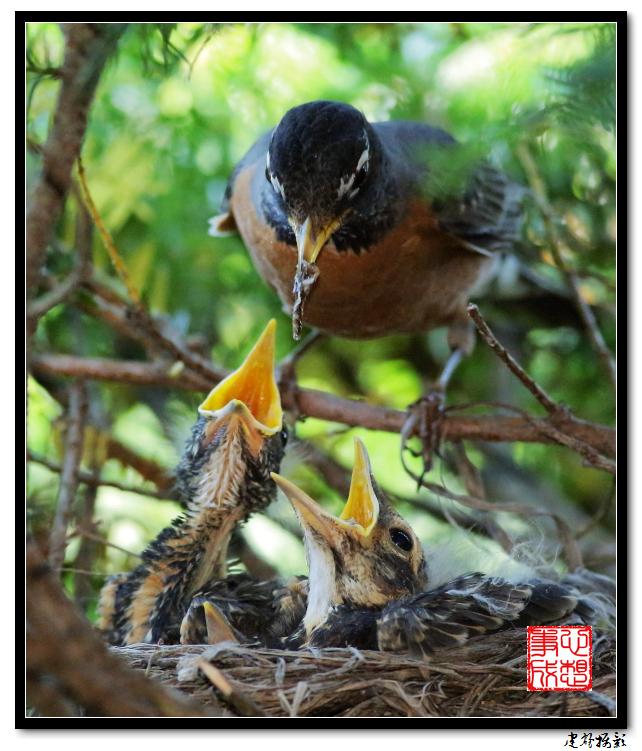 【心想事成】为我家门前的鸟巢拍个照之2_图1-8