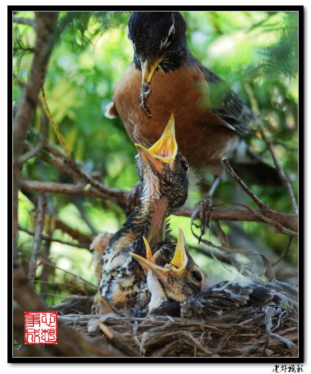 【心想事成】为我家门前的鸟巢拍个照之2_图1-9