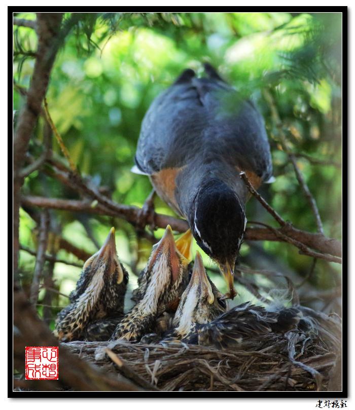 【心想事成】为我家门前的鸟巢拍个照之2_图1-27