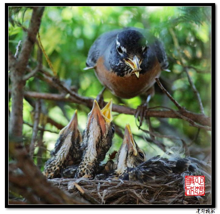 【心想事成】为我家门前的鸟巢拍个照之2_图1-28