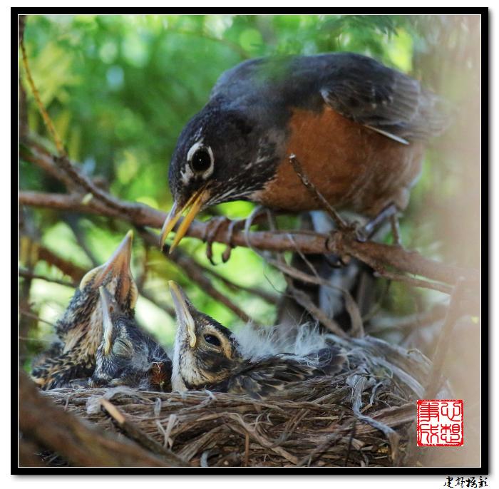 【心想事成】为我家门前的鸟巢拍个照之2_图1-10