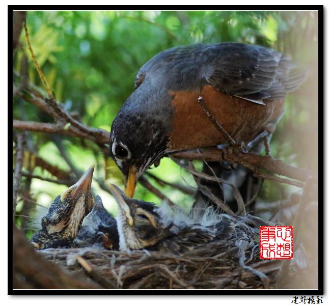 【心想事成】为我家门前的鸟巢拍个照之2_图1-11