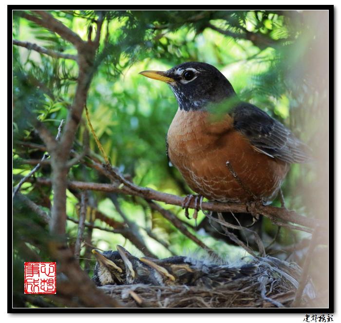 【心想事成】为我家门前的鸟巢拍个照之2_图1-12