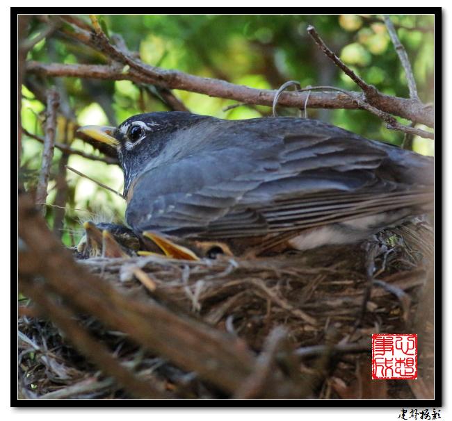 【心想事成】为我家门前的鸟巢拍个照之2_图1-13