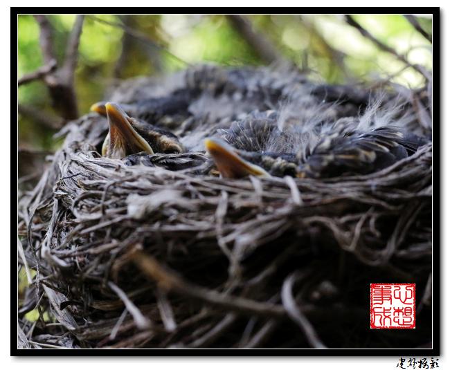 【心想事成】为我家门前的鸟巢拍个照之2_图1-14
