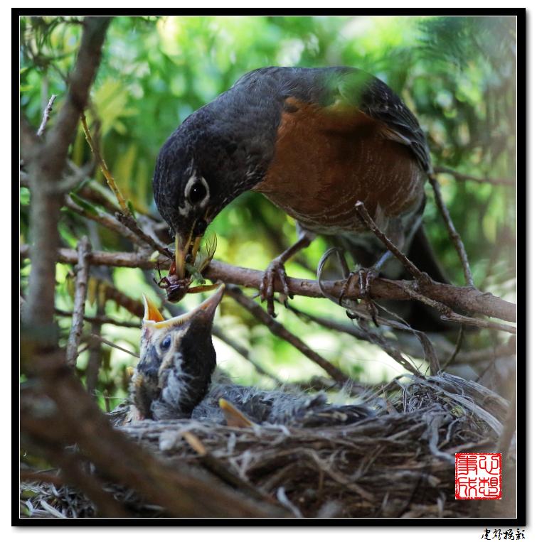 【心想事成】为我家门前的鸟巢拍个照之2_图1-15