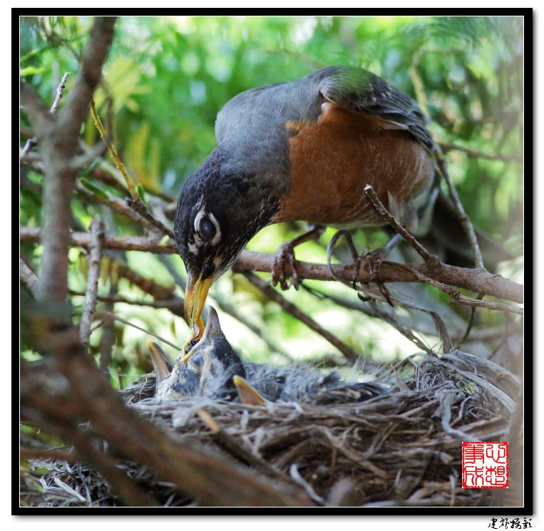 【心想事成】为我家门前的鸟巢拍个照之2_图1-16
