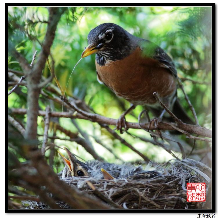 【心想事成】为我家门前的鸟巢拍个照之2_图1-17