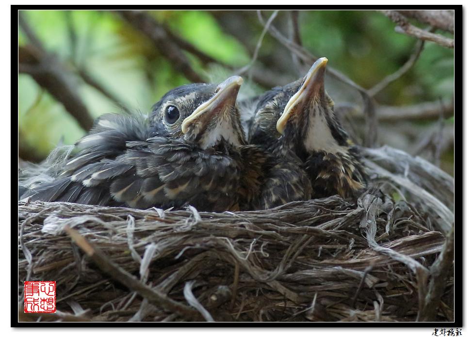 【心想事成】为我家门前的鸟巢拍个照之2_图1-19