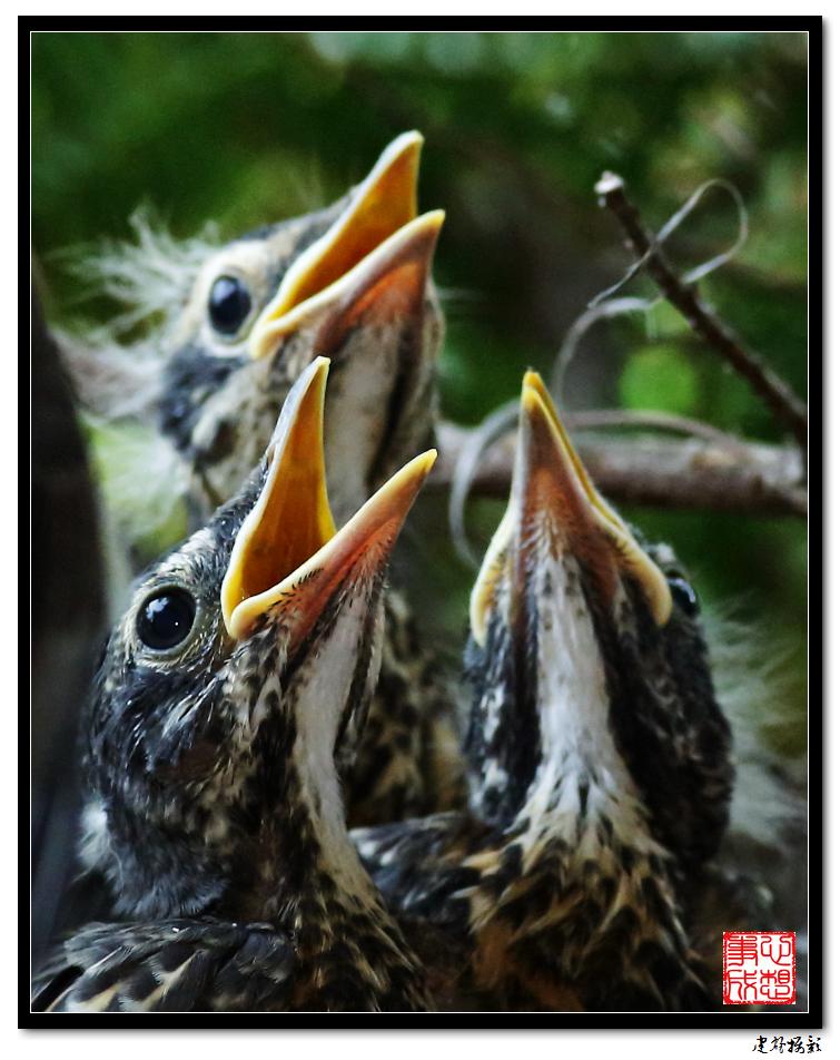 【心想事成】为我家门前的鸟巢拍个照之2_图1-20