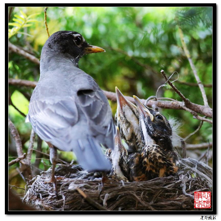 【心想事成】为我家门前的鸟巢拍个照之2_图1-21