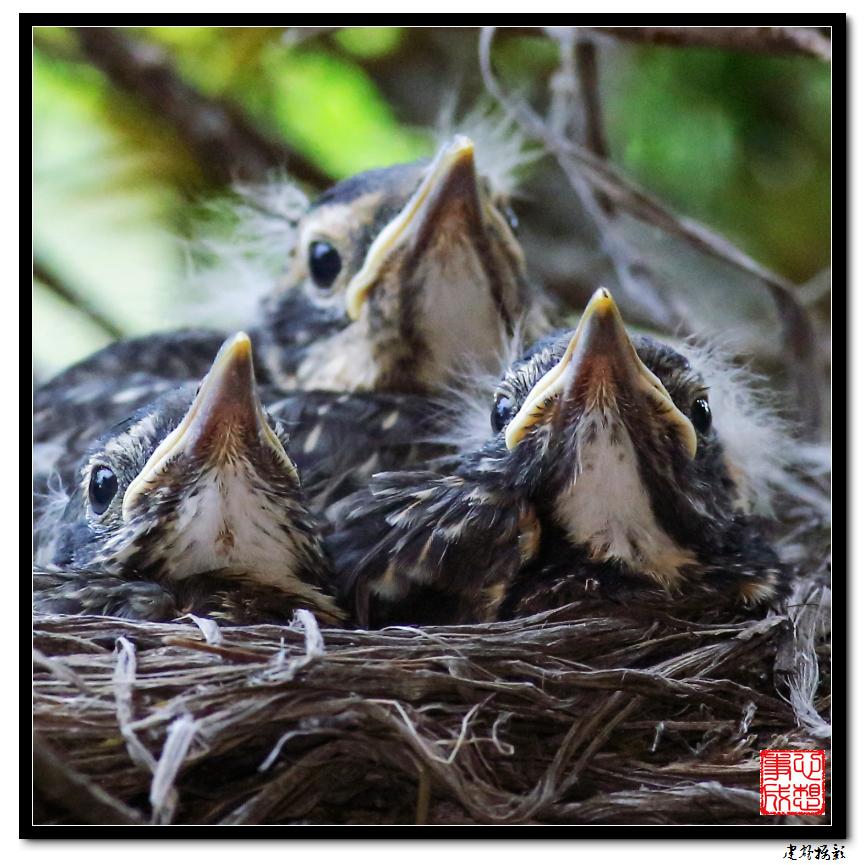 【心想事成】为我家门前的鸟巢拍个照之2_图1-23