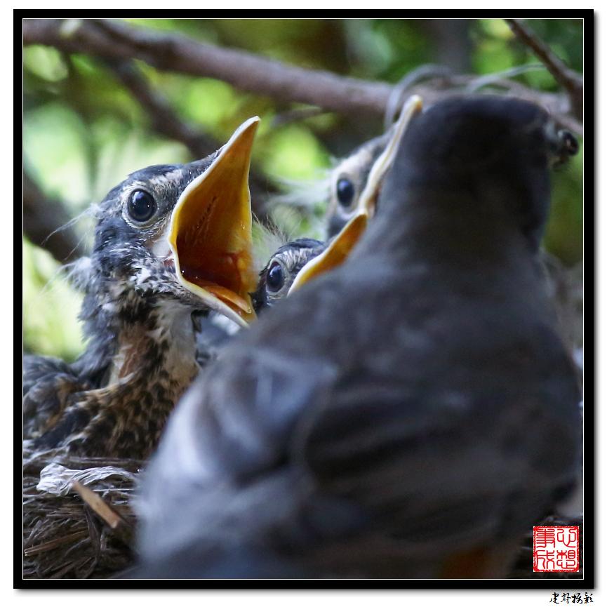 【心想事成】为我家门前的鸟巢拍个照之2_图1-22