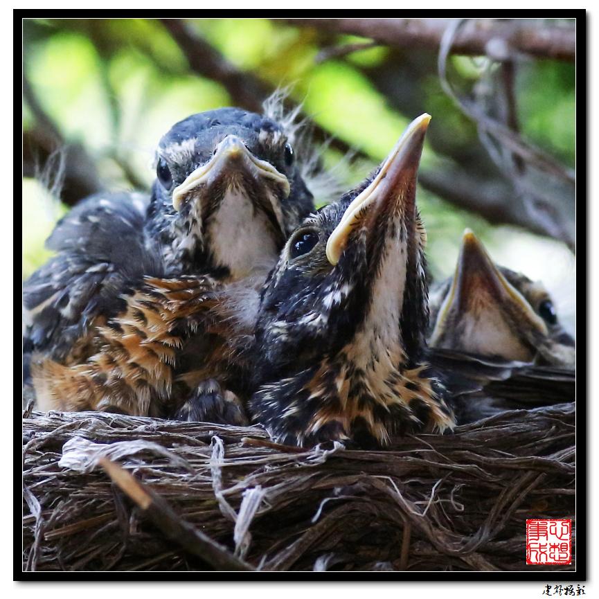 【心想事成】为我家门前的鸟巢拍个照之2_图1-29