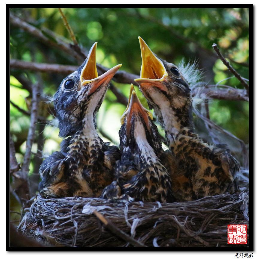 【心想事成】为我家门前的鸟巢拍个照之2_图1-24