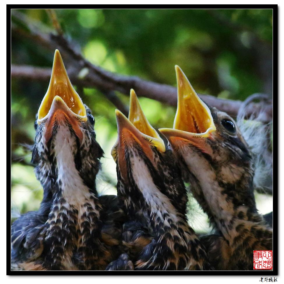 【心想事成】为我家门前的鸟巢拍个照之2_图1-25