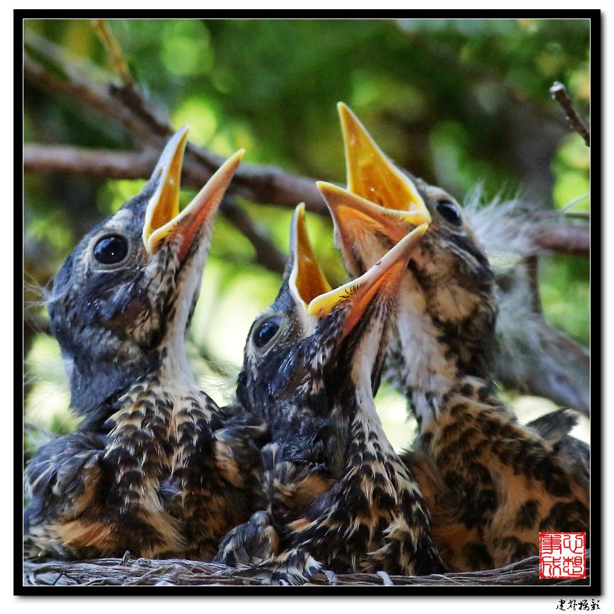【心想事成】为我家门前的鸟巢拍个照之2_图1-30