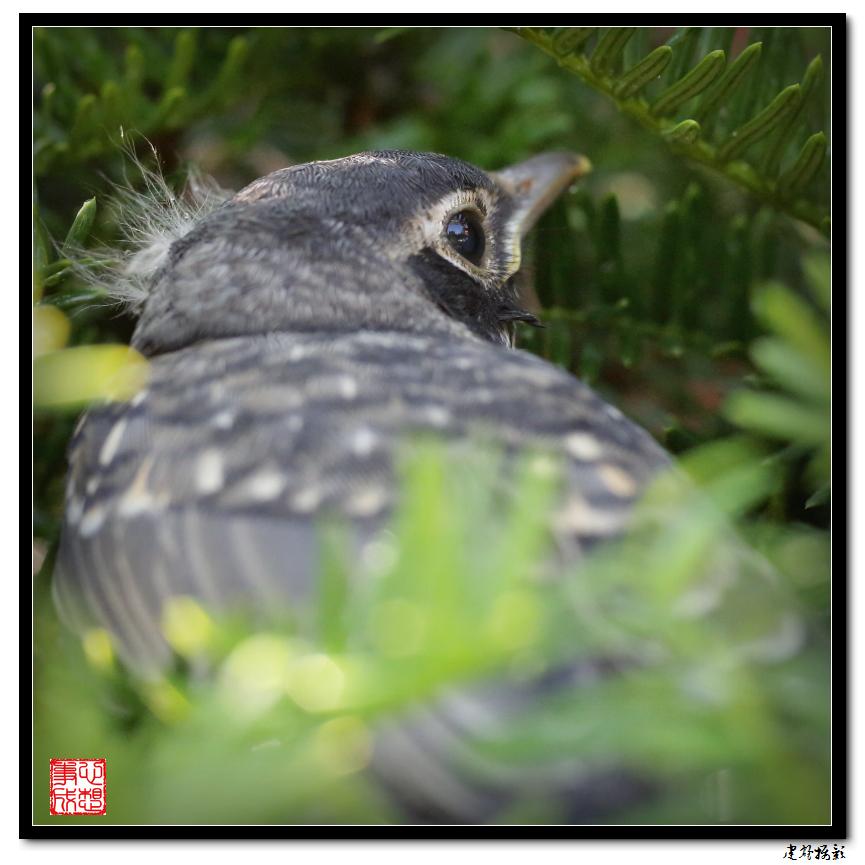 【心想事成】最后的一只小鸟_图1-2