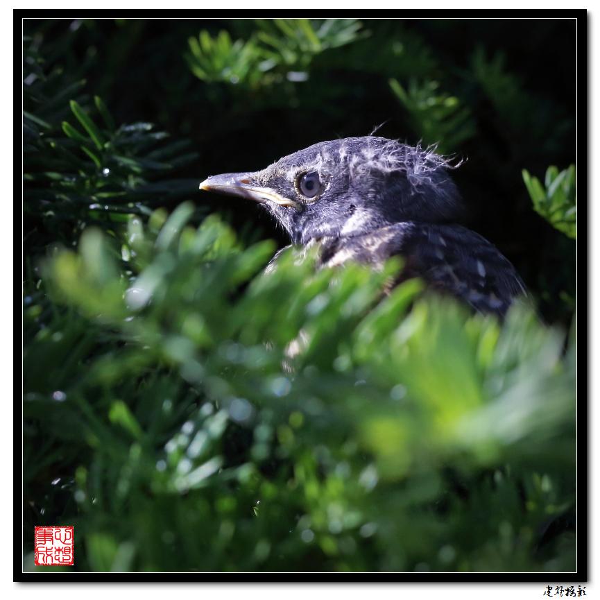 【心想事成】最后的一只小鸟_图1-5
