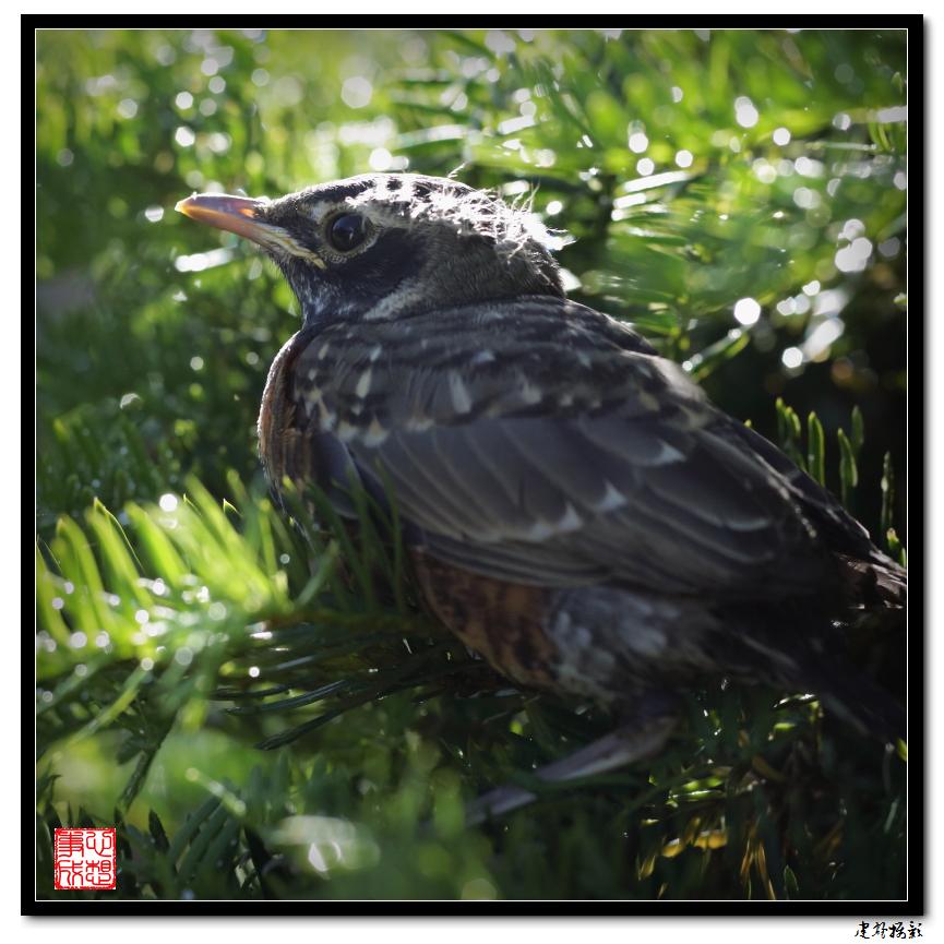 【心想事成】最后的一只小鸟_图1-8