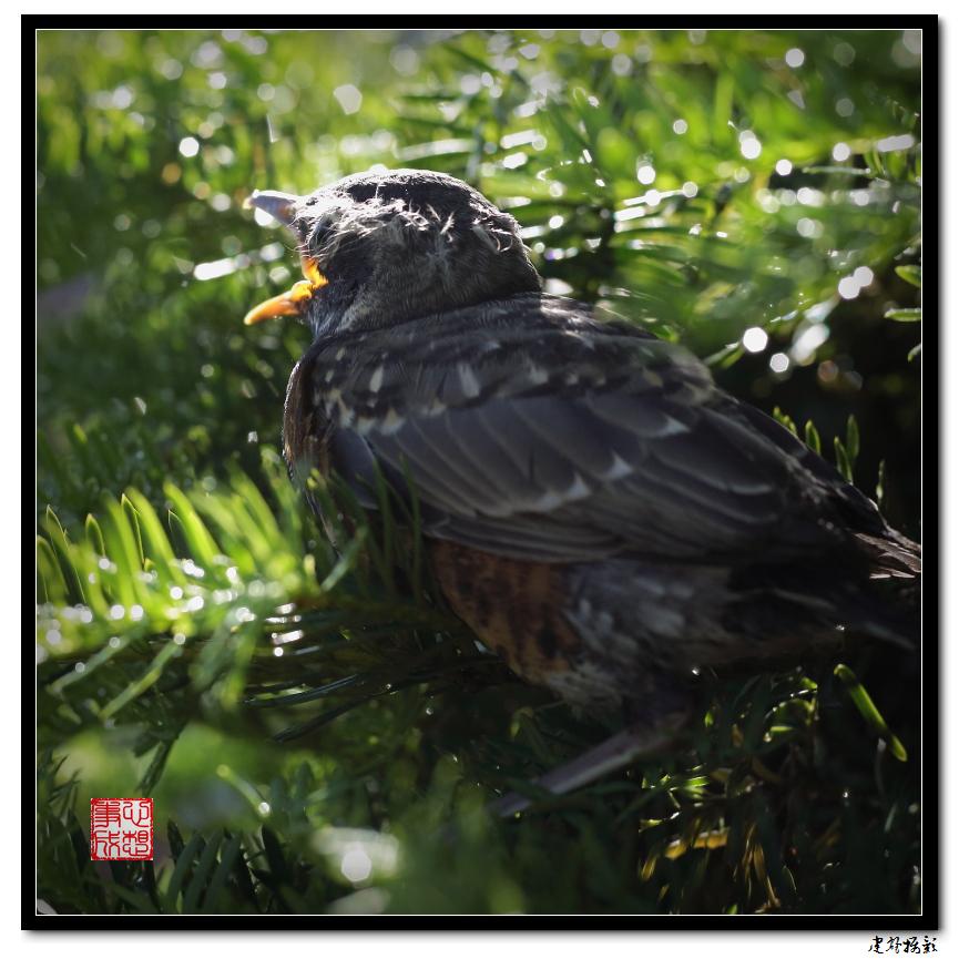 【心想事成】最后的一只小鸟_图1-9