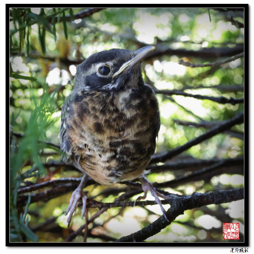 【心想事成】最后的一只小鸟_图1-11