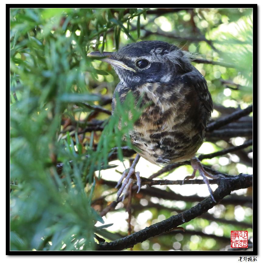 【心想事成】最后的一只小鸟_图1-12